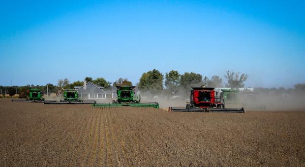 IGC: Wyższe prognozy światowej produkcji soi w mijającym i nowym sezonie