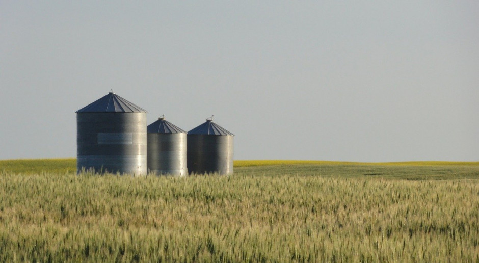 KE ponownie obniża prognozę zbiorów pszenicy w UE