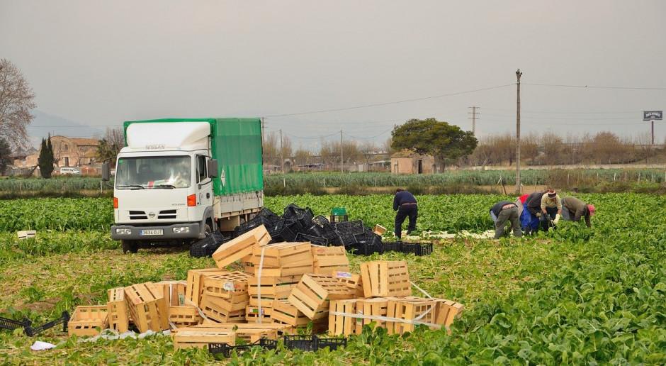 Włochy: Koronawirus szerzy się wśród pracowników sezonowych