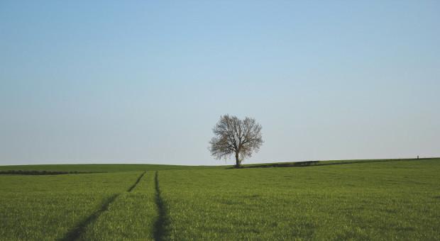 Zagospodarowano 95 proc. z 75 tys. ha ziemi wyłączonej z dzierżaw