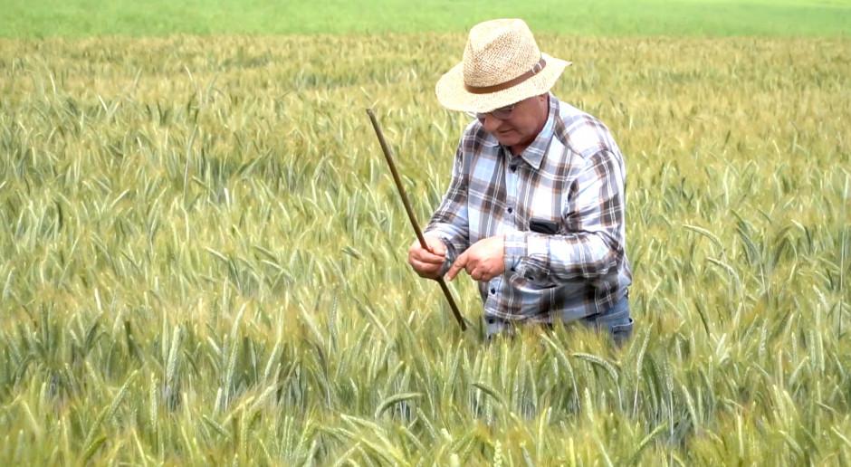 """Dzień Pola """"Farmera"""" - pszenżyto ozime - wyprzedzający cios"""