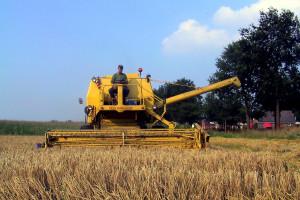 DBV : Niemieckie zbiory zbóż w tym roku ponownie poniżej średniej