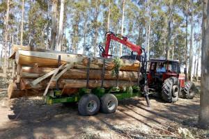 Przyczepy leśne T644/1 służą w Urugwaju m.in. do zwożenia eukaliptusu. fot. materiały prasowe