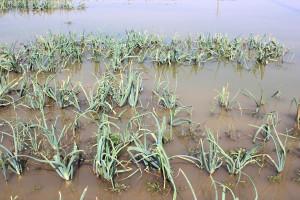IMGW: Ostrzeżenie hydrologiczne na południu i wschodzie Polski
