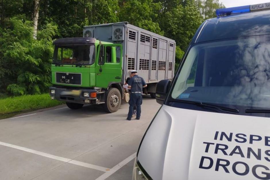 Inspektorzy wstrzymali transport świń niezdezynfekowanym pojazdem, Foto: WITD Bydgoszcz