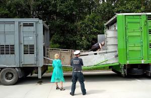 Przewoźnik musiał podstawić inną ciężarówkę, na którą przeładowano zwierzęta