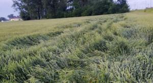 Sonda Farmera: Jakich plonów spodziewać się w tym roku?