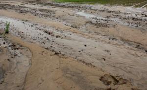 Tak wygląda wiele pól uprawnych w kraju po przejściu nawalnych deszczów, burz i powodzi, Foto: GT