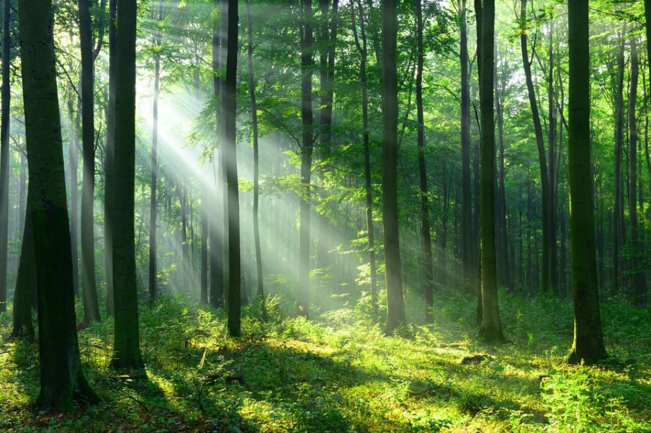 W Europie szybko znikają obszary leśne