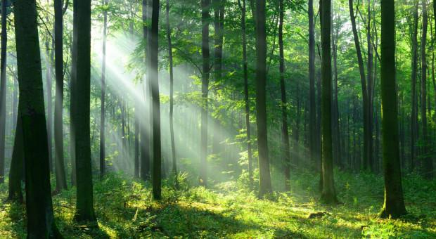 Zwiększone zagrożenie pożarowe w lasach w kilku województwach