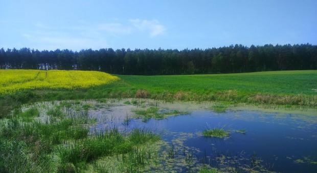 Śródpolne oczka wodne skutecznie zapobiegają suszy rolniczej