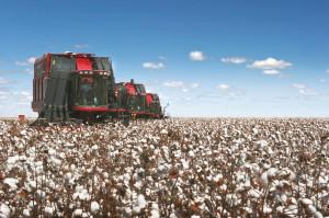 Koncern CNH Industrial realizuje duże zamówienie dla uzbeckiego producenta bawełny, fot. mat. prasowe