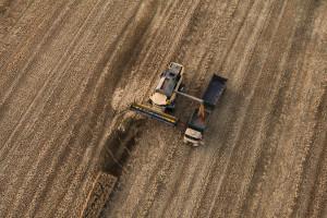 Sonda Farmera: Jakie plony zbierzemy w tym roku? (część 2)