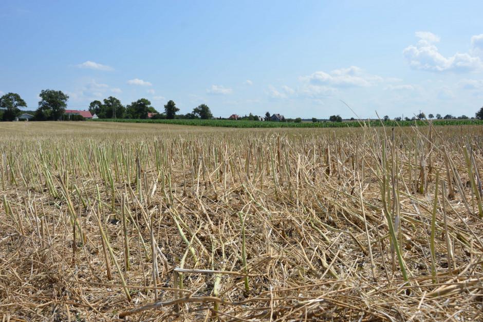 Słoma powinna być traktowana jako nawóz. Wprowadzona do gleby dostarcza podstawowe składniki pokarmowe: azot, fosfor, potas, siarkę, magnez, wapń oraz mikroelementy