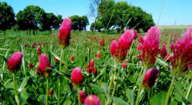 Zadbać o różnorodność środowiska rolniczego