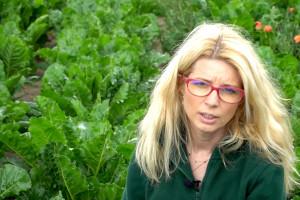Dni pola on-line: stan upraw w Wielkopolsce