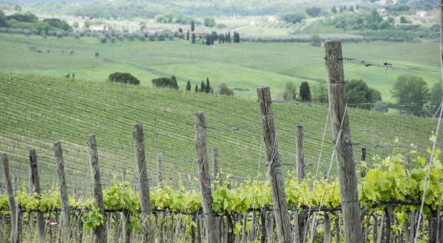 Francja: O 13 proc. większa powierzchnia upraw ekologicznych