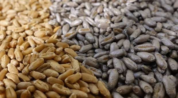 Srebrne nasiona dzięki nowemu polimerowi