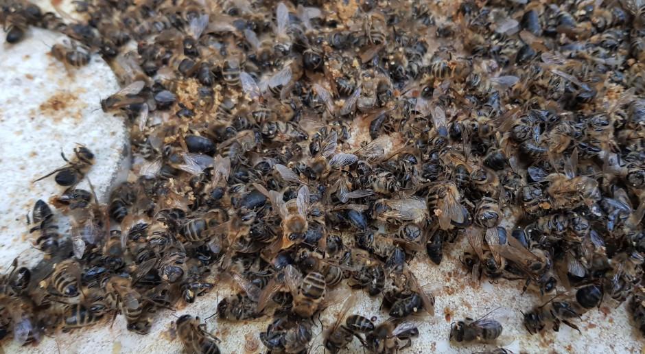 Wytruł pszczoły sąsiadowi