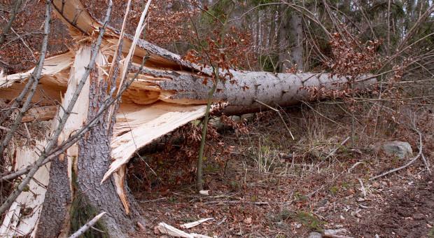 Jak usunąć zgodnie z prawem powalone drzewo na posesji?