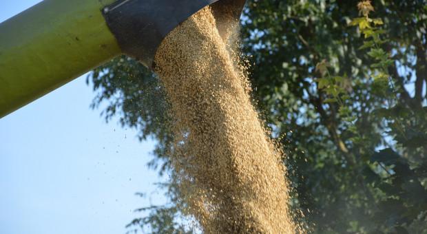 Rosstat: Rosja wyprodukowała w 2020 roku blisko 133 mln ton zbóż