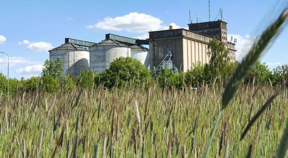 Czy eksport zbóż się opłaca - także rolnikowi?