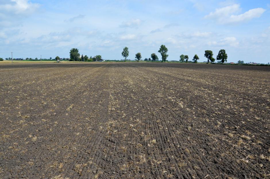 Pole po zbiorze mieszanki gorzowskiej obsiane kilka dni temu lucerną. Jak mówi rolnik, nawet z wysiewem tak małych nasion siewnik Espro radzi sobie bez problemu