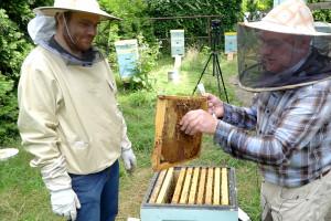 """Wszystko o pszczołach  - rozpoczynamy nowy cykl """"Farmera""""!"""
