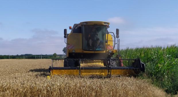 Zbiór zbóż 2020 - jakie ceny za usługę?