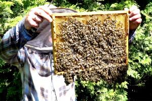 Pasieka przy domu: Pszczoły gotowe do zimy