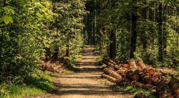 FAO: Powierzchnia lasów w UE od 1990 roku wzrosła o 14 mln ha