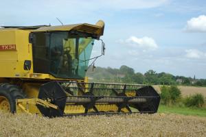 IGC obniżyła prognozę światowej produkcji zbóż ogółem