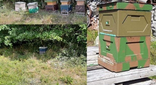 Złodzieje kradli ule i pszczoły z pasiek