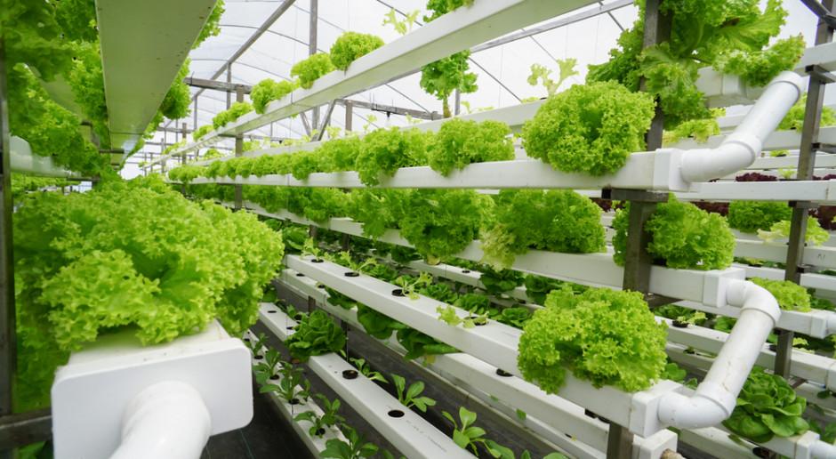 Na Uniwersytecie Rolniczym w Krakowie powstała modułowa uprawa hydroponiczna