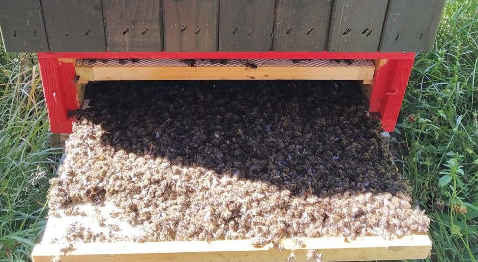 Pszczoły Pawła Kukiza ofiarami odkomarzania