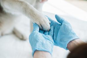 USA: Pierwszy pies śmiertelną ofiarą koronawirusa
