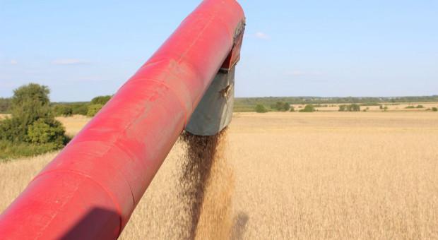 Ukraiński agroholding z większymi plonami zbóż - nawet o 52 proc.