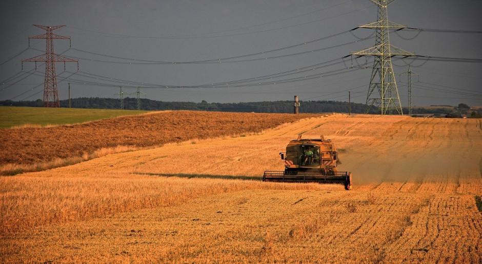DBV: Zbiór rzepaku i pszenicy w Niemczech jest powolny