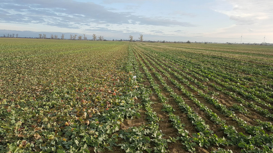 Stan plantacji listopad 2019, fot. RZD IOR-PIB w Winnej Górze.