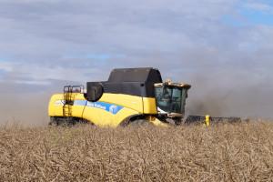 Jakie ceny zbóż w żniwa?
