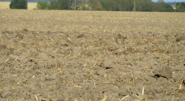 Odchwaszczanie pola przed siewem rzepaku