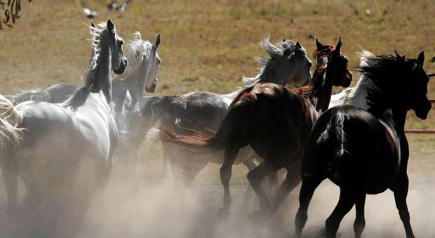 Ogier Ferrum najlepszym koniem 42. Narodowego Pokazu Koni Arabskich