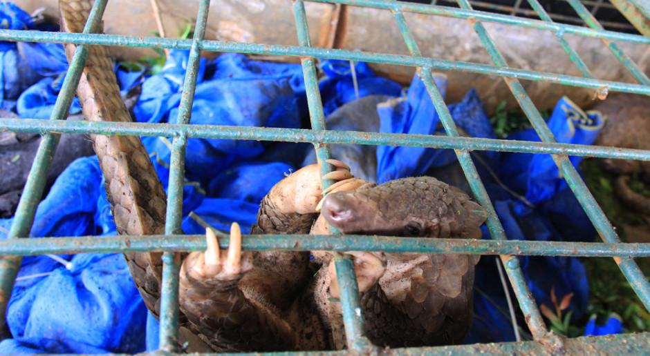 Nielegalny handel zagrożonymi gatunkami roślin i zwierząt wart ok. 20 mld dol.