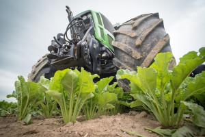 Francja chce zgody na użycie neonikotynoidów do zaprawienia nasion buraka