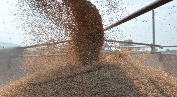 Jakie zaawansowanie zbioru zbóż i ceny?
