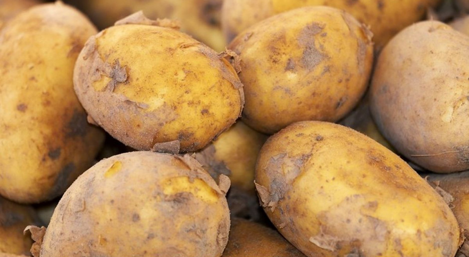 Automat sprzedaje czeskie ziemniaki