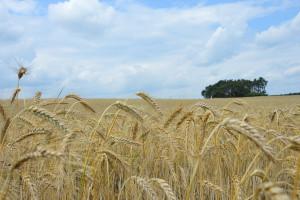 MRiRW: do 9 września można wziąć udział w ankiecie nt. przyszłości wsi w UE