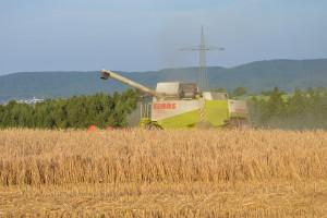 DRV: Zbiory niemieckie zbóż znacznie mniejsze niż przed rokiem