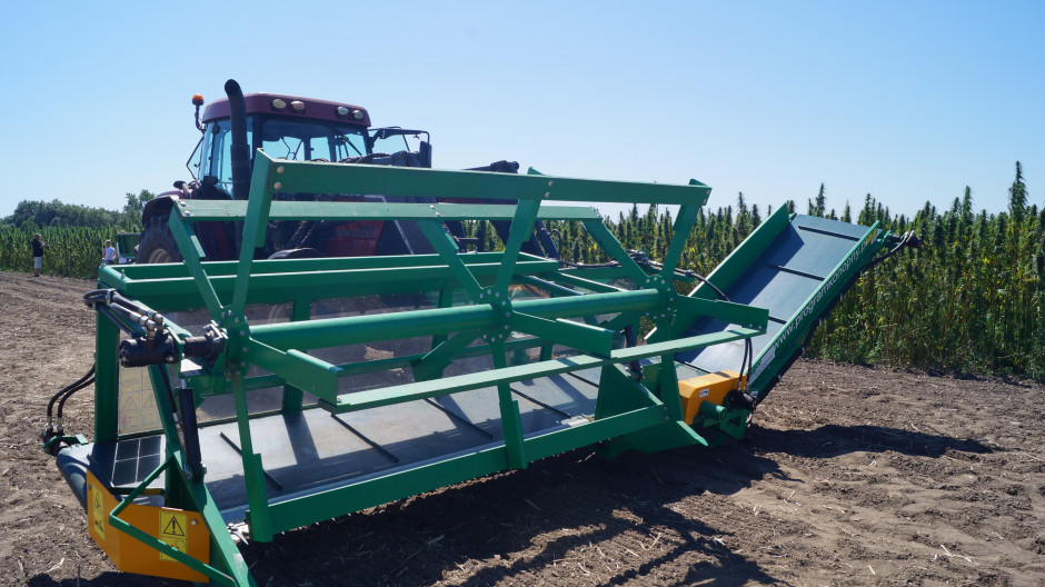 Maszyna pozwala na koszenie roślin konopi zbieranych dwuetapowo.