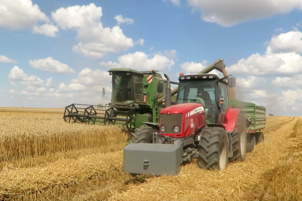 Udane żniwa na Mazowszu: wysokie plony, dobrej jakości pszenica